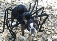 A spider the size of a puppy? Yes please! | CycloneFanatic ...