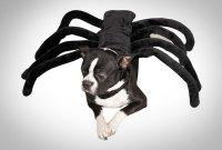 Tarantula Spider Dog Costume