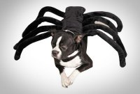 Tarantula Spider Dog Costume
