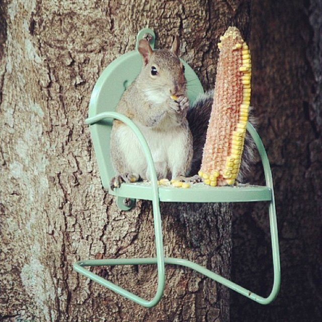 bungee chair amazon desk chairs staples uk this squirrel attaches to your tree