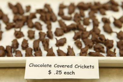 Bald is Beautiful, Lower Case Day, Chocolate Covered Insects