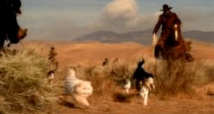 cat-herding-11