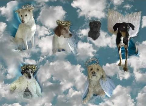 Heavenlydogs