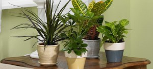 caring_for_houseplants