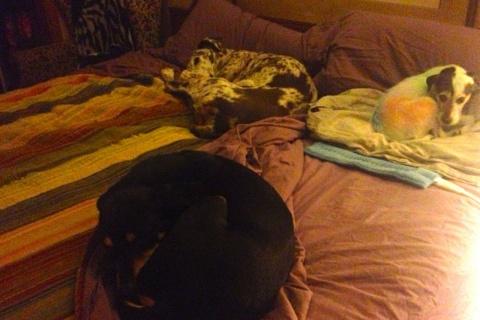 3 dogs night