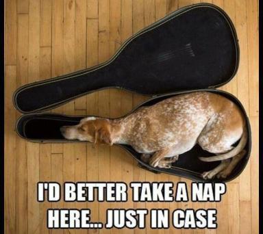 nap in a case