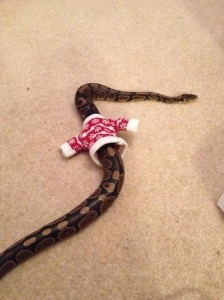 Critter Christmas sweater