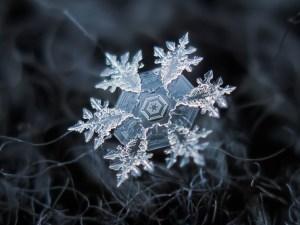 Snow flakes