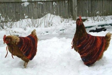 rooster Christmas sweater