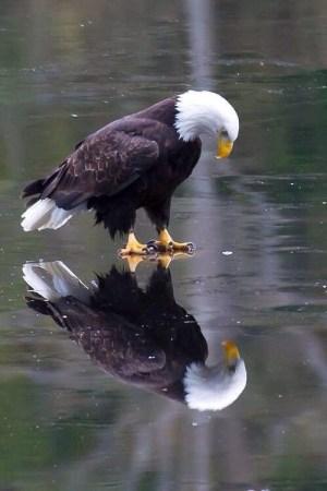 Bird reflecting