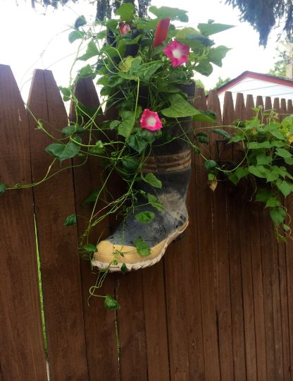 Fireman boot, Morning Glories and Yard Art