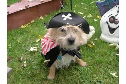 Max, Talk Like A Pirate Day, Butterscotch Pudding Day