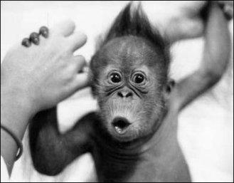 Monkey Day, Bouillabaisse Day