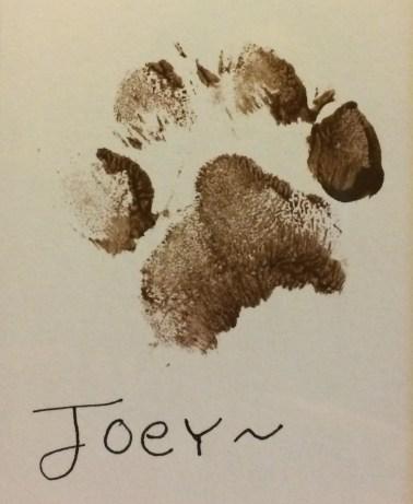 Joey The Beagle paw print