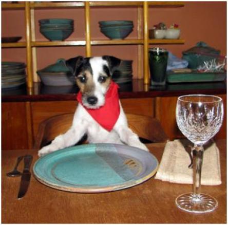 Dog Food Apply Common Sense