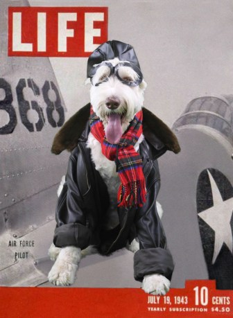 Aviation pet costume