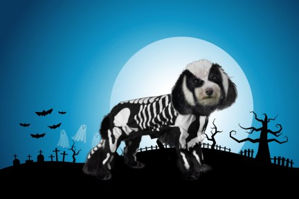 Halloween, Dog, Skeleton