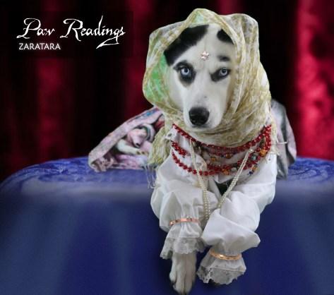 Halloween Fortune teller, dog