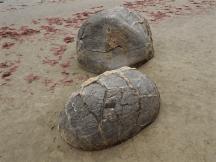 Moeraki Boulders - 5 of 7