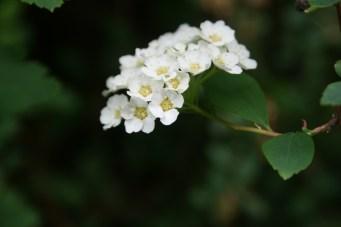 If you need flowering shrubs, we've got flowering shrubs everywhere