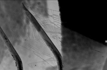 Toile d'araignée sur les bords de la rivière d'Étampes