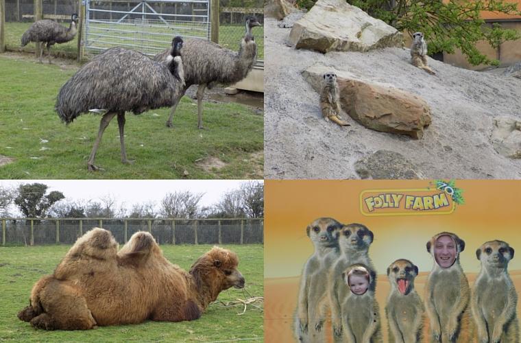 Folly Farm - Animals
