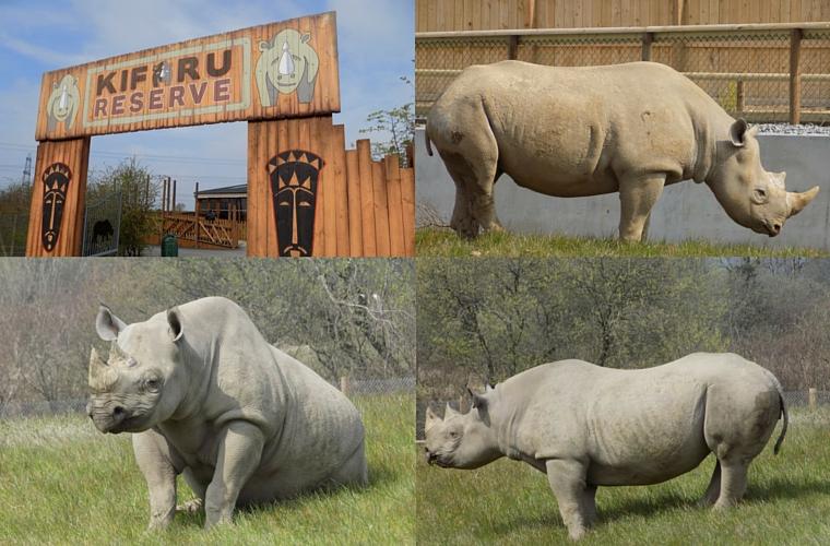 Folly Farm - Rhino