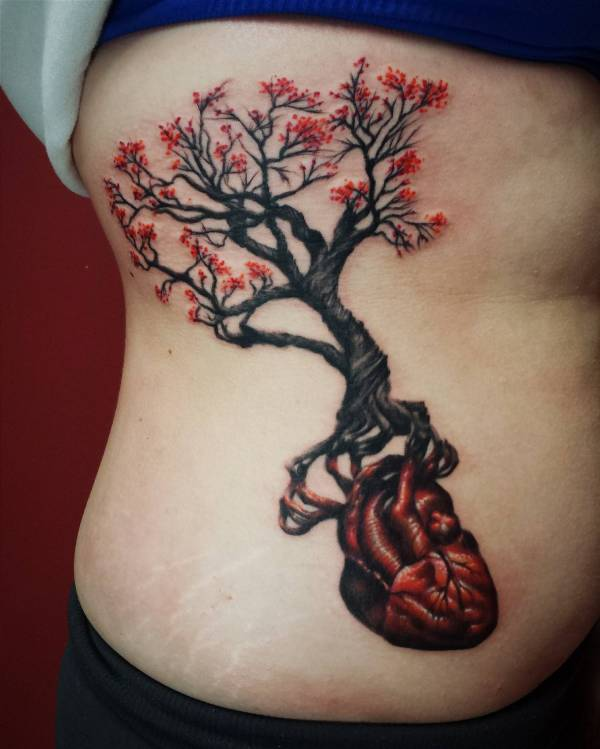 gnarly tree roots and anatomical