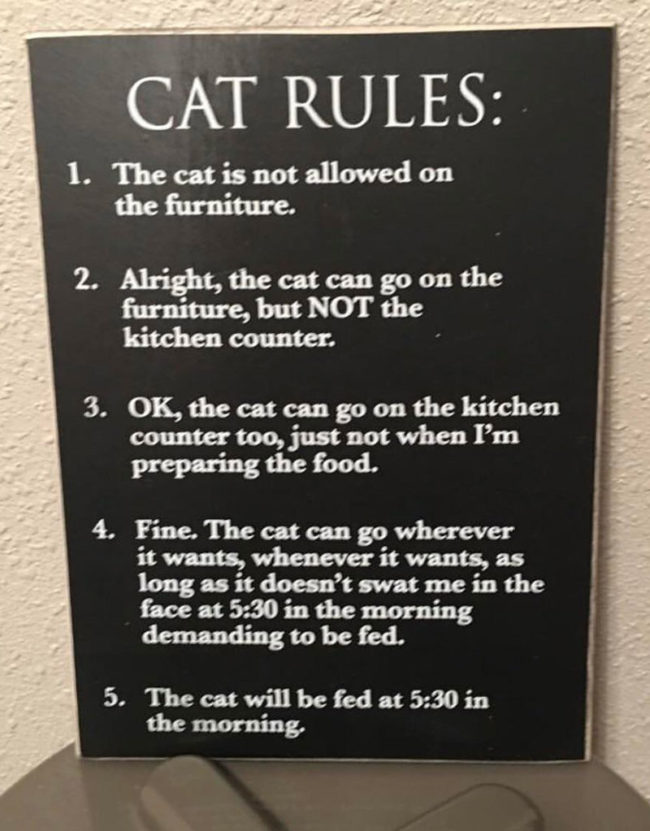 https://i0.wp.com/oddstuffmagazine.com/wp-content/uploads/2017/12/Cat-rules-650x831.jpg