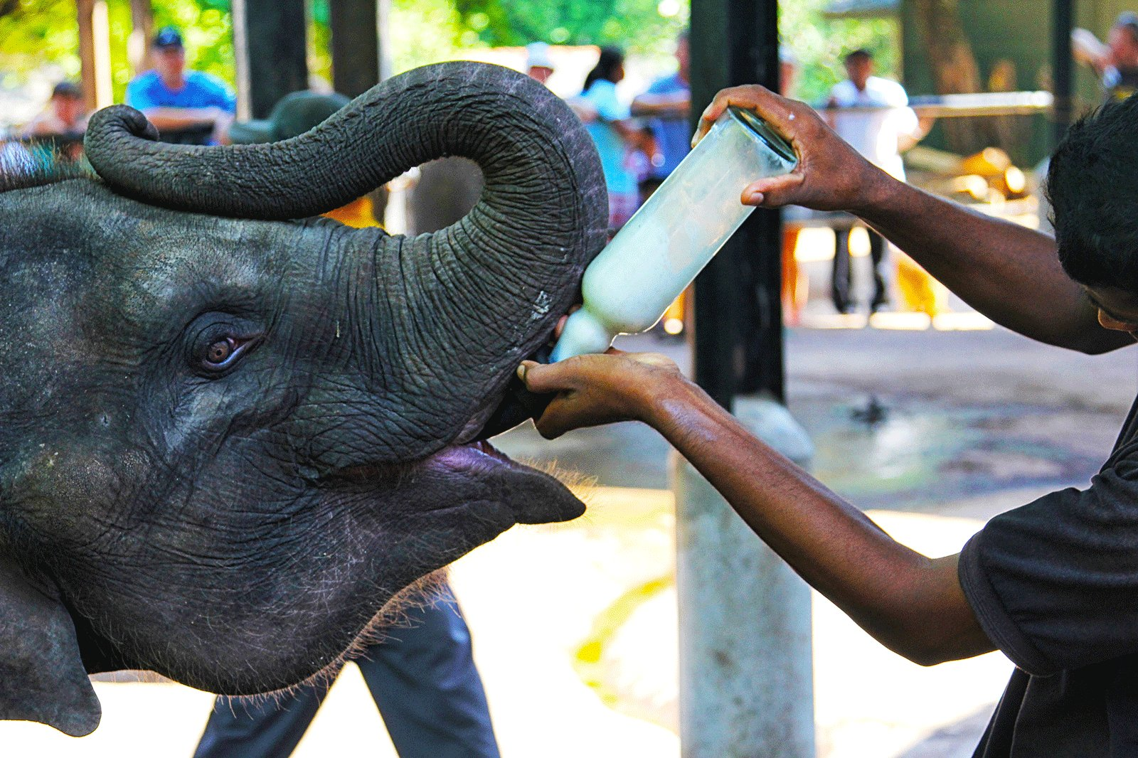 baby feeding chairs in sri lanka senior chair exercises how to feed a elephant kandy