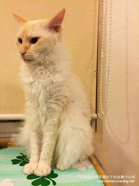 cat151120_14