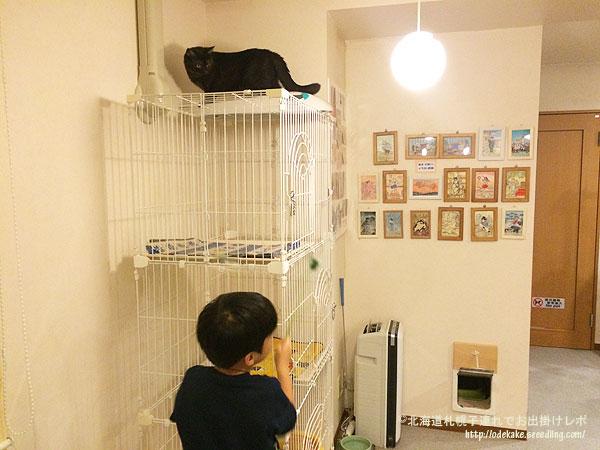 cat151120_6