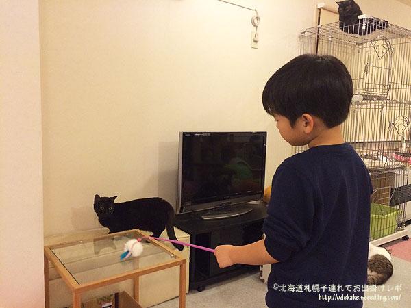 cat151120_8