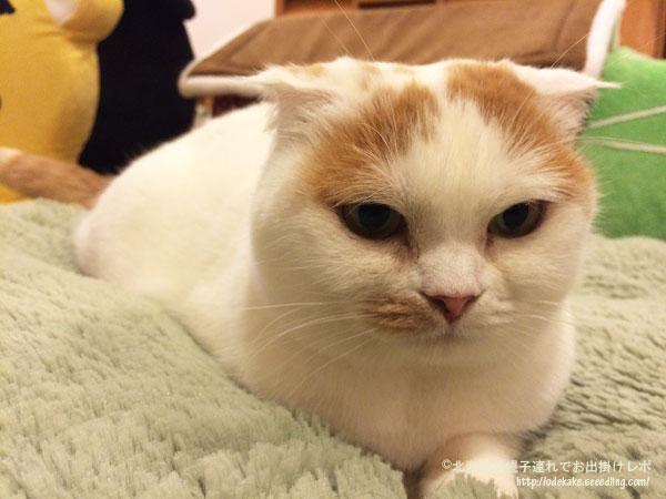 cat151120_9