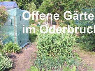 Offene Gärten im Oderbruch