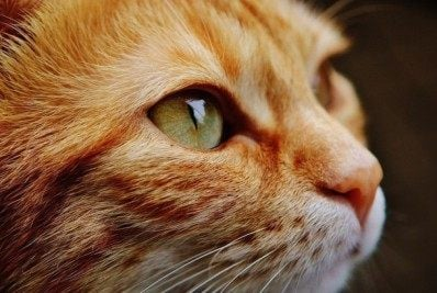 Gatos gostam mais de humanos que de comida - Reprodução