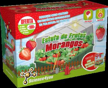 estufa-de-frutas-morangos