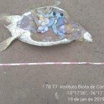 Tartaruga marinha é encontrada mutilada na praia de Feliz Deserto