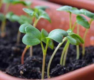 Passo a passo: veja como fazer sua própria horta orgânica