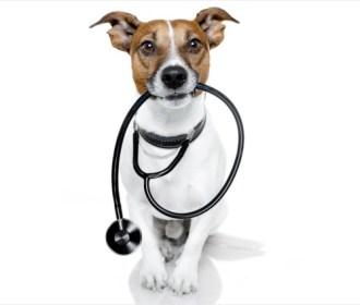 Com olfato apurado, cães conseguem farejar câncer com 97% de precisão