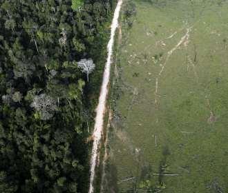 87 empresas cobram País sobre desmate na Amazônia