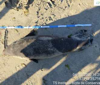 Animais marinhos são encontrados mortos nas praias de Alagoas