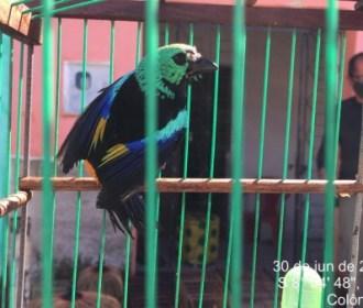 Mais de 200 pássaros são resgatados durante ação conjunta na APA de Murici