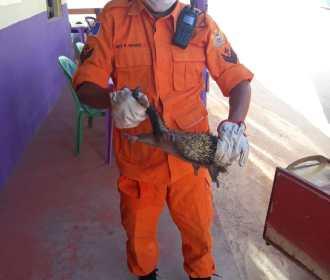 Porco-espinho é capturado em lanchonete de Maragogi