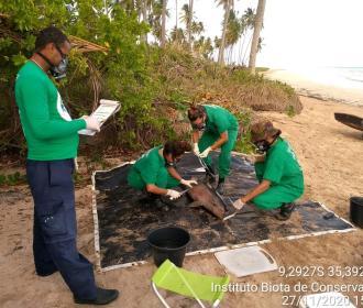 Boto Cinza é encontrado morto na Praia do Marceneiro, em Passo do Camaragibe