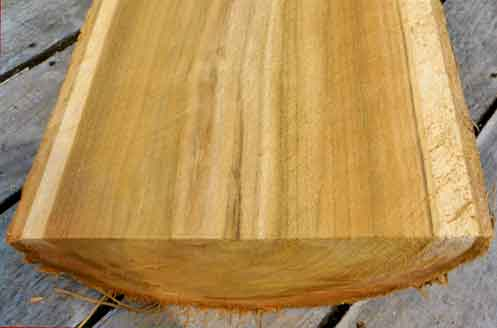 порода древесины тик