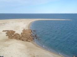 Лёжка моржей на одном из Больших Оранских островов.