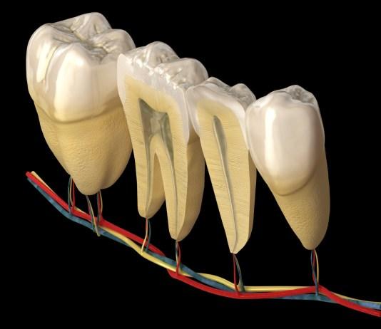 Anatomia e Escultura Dental | OdontoUP