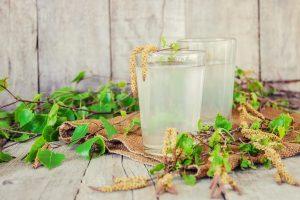 Woda brzozowa. Jak sok z brzozy wpływa na zdrowie?