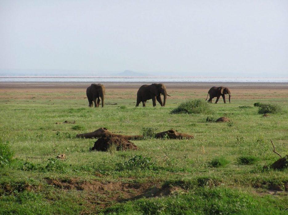 many, many elephant